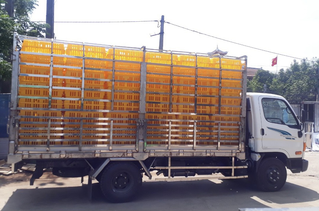 xe tải Mighty 75S 3.5 tấn hyundai chở gia cầm
